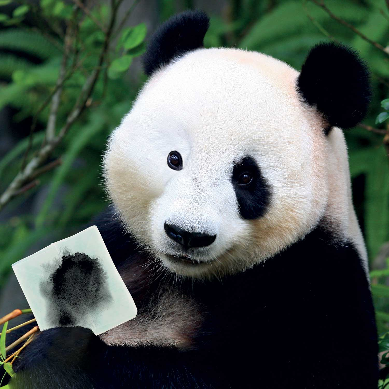 panda limpieza smake-up
