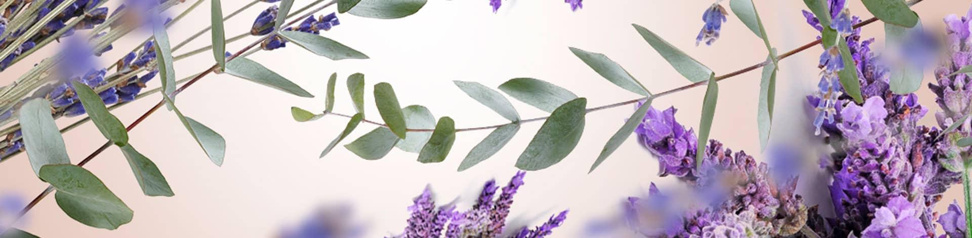 Un campo de Lavanda freca aroma floral