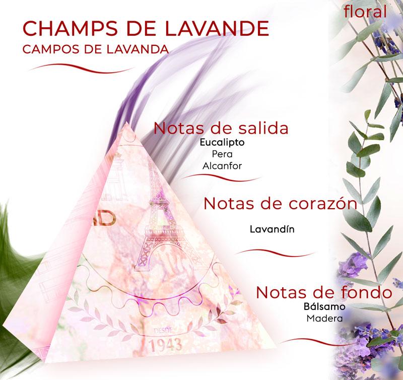 pirámide olfativa de Campos de Lavanda aroma floral