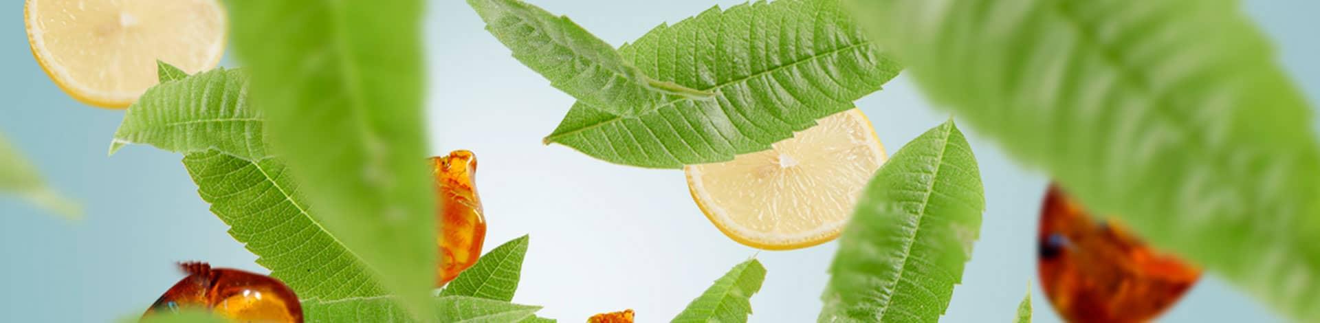 Verbena y limón aroma fresco