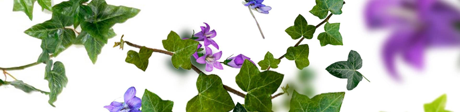 Flores Lolilta Lempicka