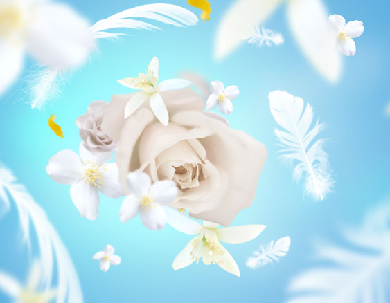 delicat-musc-blanc-563x438.jpg