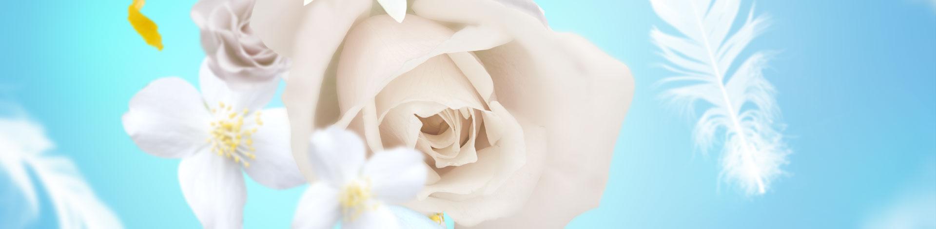 Flores delicadas almizcle