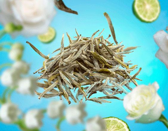 Hojas de TÉ aroma fresco