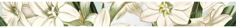 Las flores de Caron