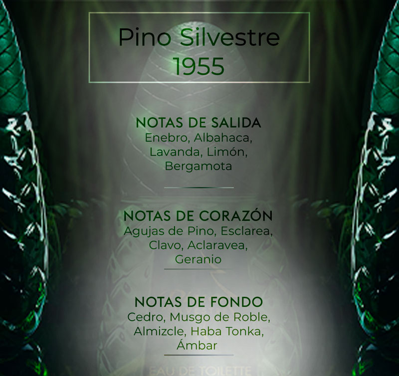 Pirámide olfativa de Pino Silvestre